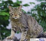 totem_cat