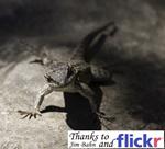 totem_lizard