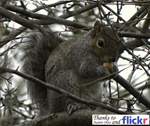 totem_squirrel